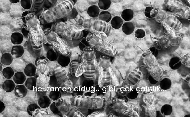 arı gibi çalışmak